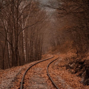 Winding train tracks through a forest